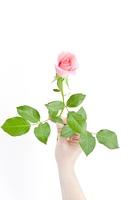 1本のバラを持つ手