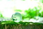 自然と地球儀