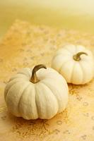 白かぼちゃ