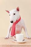 ブルテリア犬とコーヒーカップ