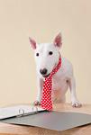 ブルテリア犬とファイル