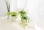 テーブルに置かれた観葉植物