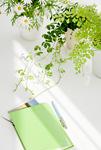 観葉植物とノートとハガキ