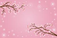 桜バックグラウンド横構 図