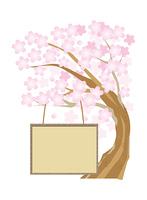 桜とお知らせボード