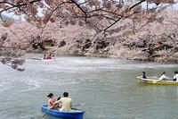 弘前公園のお濠と桜