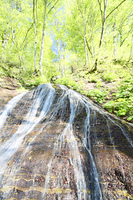 新緑の奥入瀬渓流の滝
