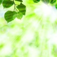 緑の葉と光