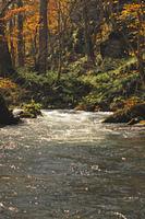 紅葉の奥入瀬渓流
