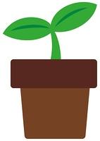 双葉と植木鉢