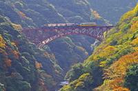 紅葉とアーチ橋とトロッコ列車