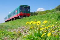 真岡鐵道とタンポポ