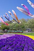 鯉のぼりと花壇と列車