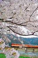 桜咲く若桜鉄道