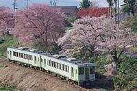 山村の桜並木と列車