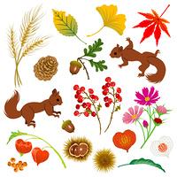 秋の素材/木の実/リス