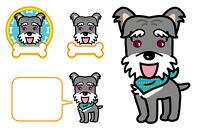 シュナウザー 犬 子犬