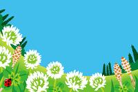 春の野原/シロツメクサ