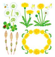 春の植物セット
