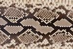 ミズヘビの皮