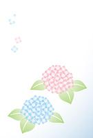 ブルーとピンクの紫陽花イラスト