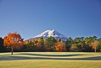 富士山と秋の公園