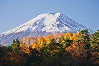 秋に色ずく木々と富士山