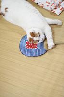 夏にくつろぐ猫