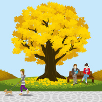大きな落葉樹 秋の公園