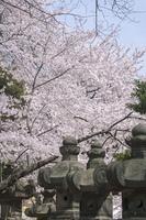 上野周辺撮影