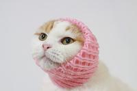 フルーツネットを被った猫