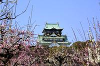 大阪城と梅林