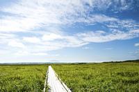夏のサロベツ原生花園と利尻山