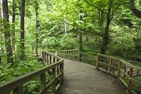札幌市円山公園の散策道