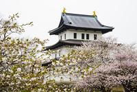桜の北海道松前城
