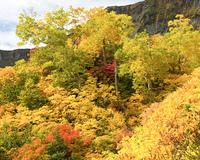 大雪山高原沼めぐりコースの紅葉
