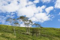 美幌峠沿いの木と空