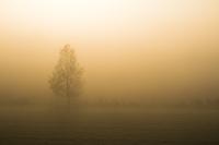 上富良野町の朝霧と木