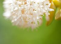 多肉植物のイメージ写真