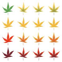 紅葉の葉セット