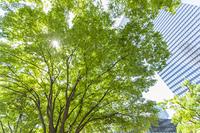 新緑の新宿高層ビル街
