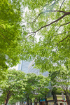 オフィスビル街の新緑