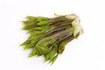山菜 コシアブラ