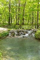 新緑の渓流と森