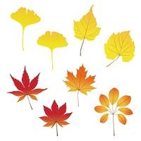紅葉したいろいろな種類の葉