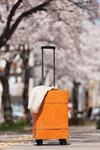 桜並木と旅行鞄