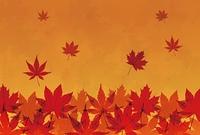 紅葉したモミジの背景画像