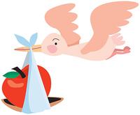 りんごを運ぶコウノトリ