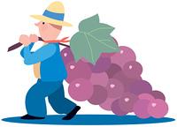 ブドウを運ぶ男性