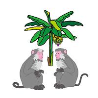 フェミニンな二匹のメスのサルとバナナの木のイラスト